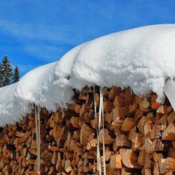 czynniki powodujące niszczenie drewna